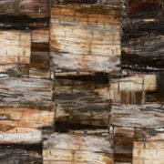 8331_Petrified_Wood_Classic